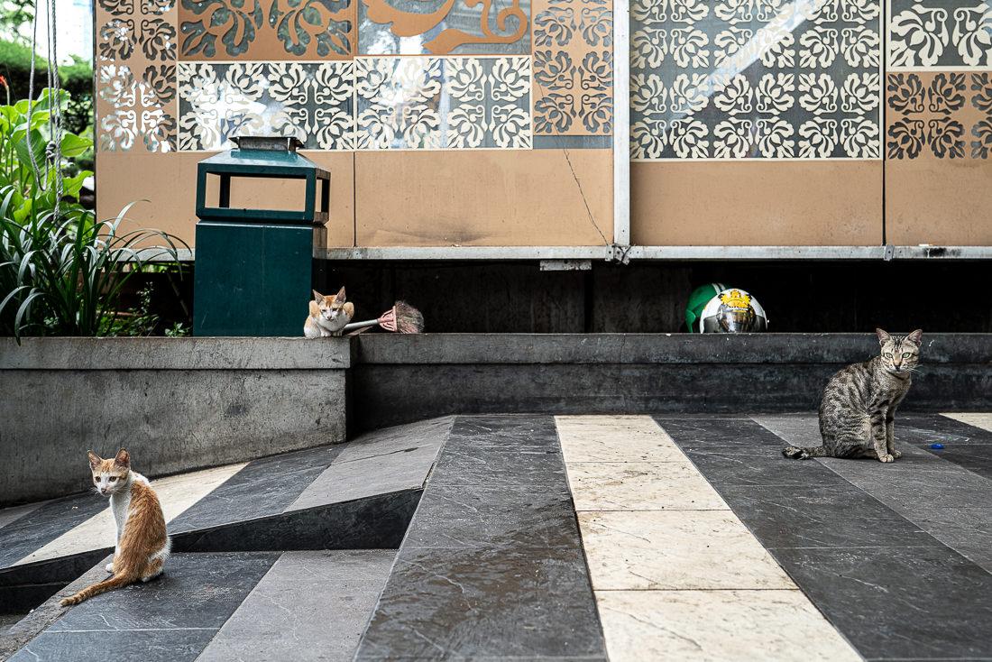 ハヤム・ウルク通り沿いでたむろしていた猫