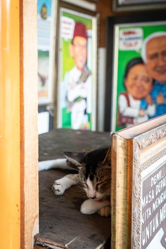 絵画の陰で寝ていた猫