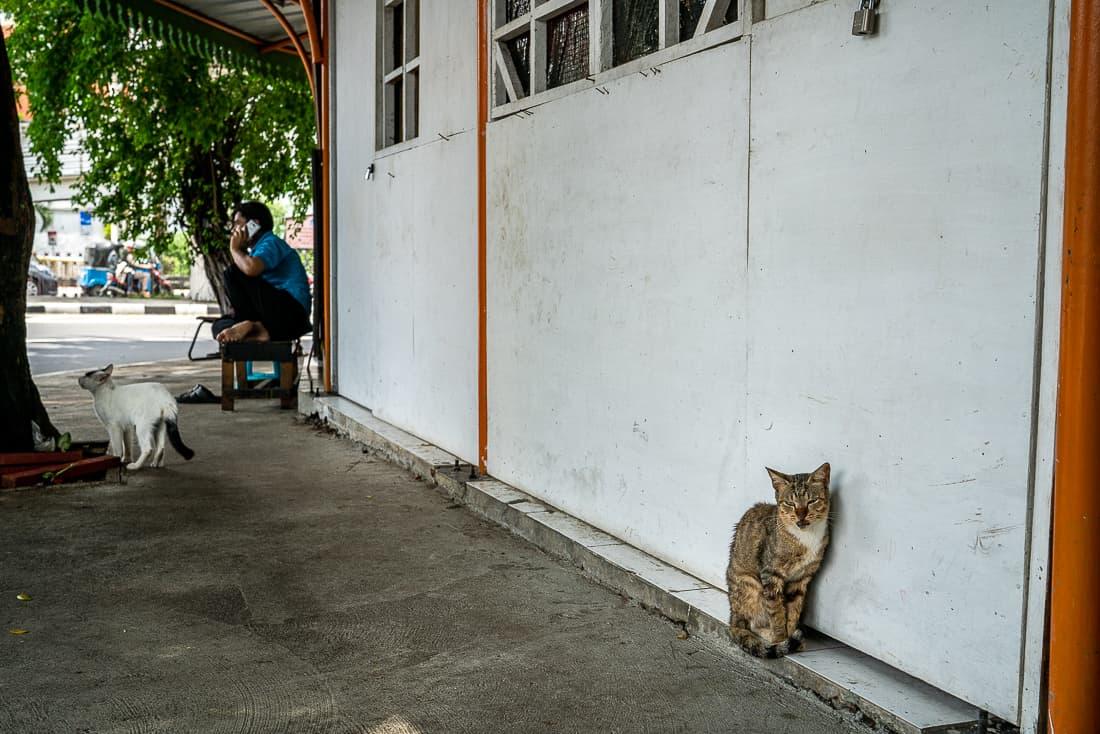 ジャカルタのサワー・ブサル地区にいた猫