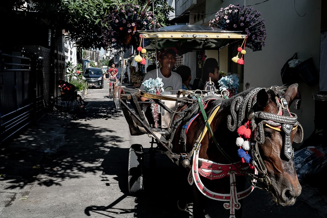 Horse-drawn carriage in a residential area