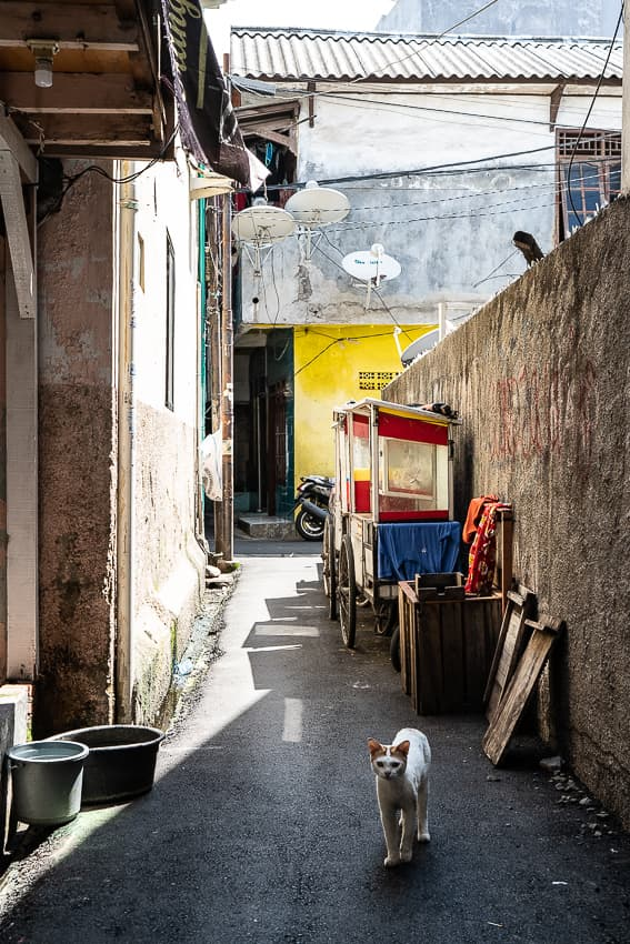 Cat appeared in a deserted alley