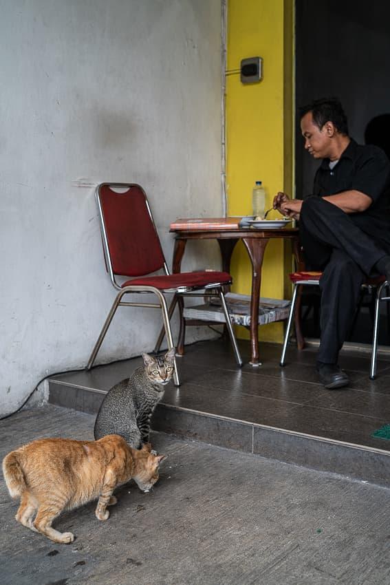猫と一緒に食事する男