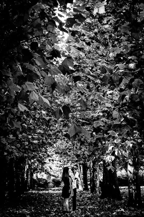 プラタナス並木で写真撮影する人