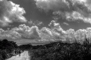 田舎道を走る自転車