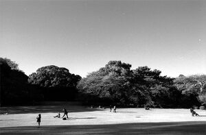 People relaxing on lawn in Shinjuku Gyoen Park