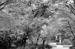Stone lantern in Koen-Ji