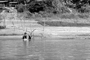 メコン川の水で洗濯していた女性