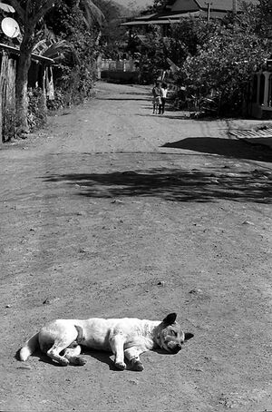 Dog sleeping well in the center of dirt road