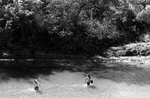 川の中で川苔を採る女の子