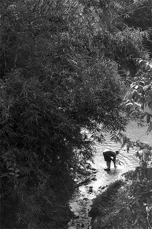 川苔を採る女性