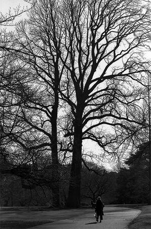 Woman walking toward tall tree
