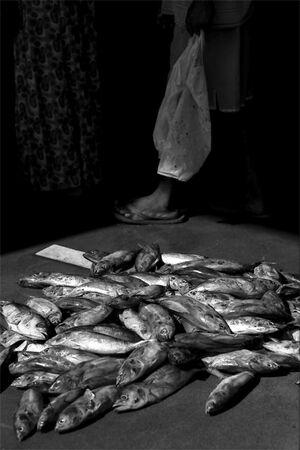 床に無造作に置かれた魚