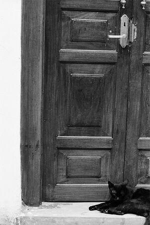 Cat lying flat in front of door