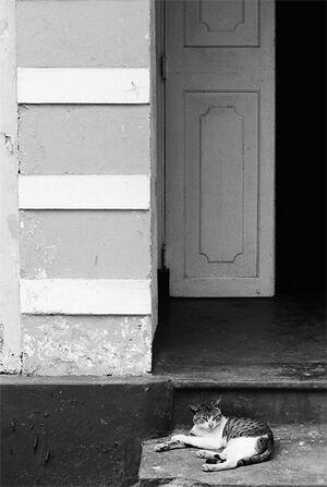 扉の前でのんびりする猫