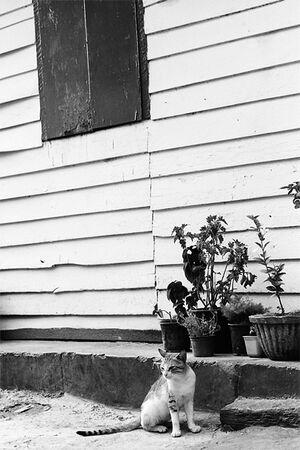 植木鉢の前にじっと座る猫