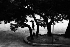 木々の間に見えるカップルのシルエット
