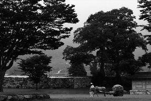Cow carriage in Nagan Folk Village