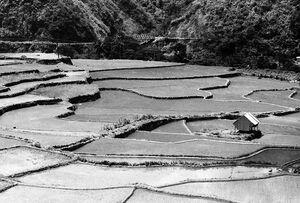 Rice terrace in Tinglayen