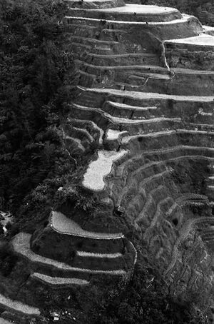Rice paddies on steep slope