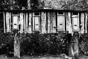 Hen house in Tam-an