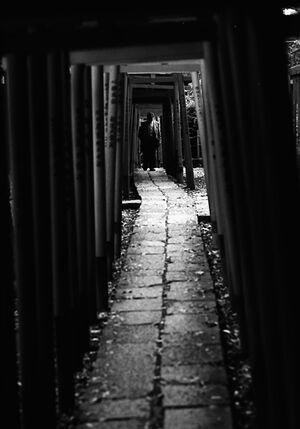 Figure walking through Torii