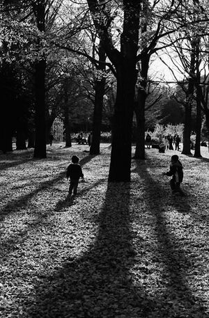 Kids playing around trees