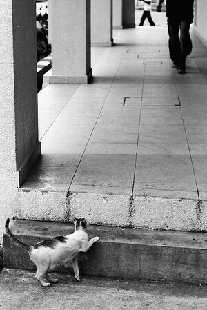 通路の様子を窺う猫