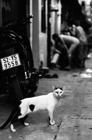 吃驚した顔で振り返る猫