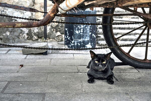 Black cat under wheels