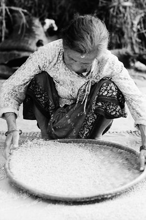 Older woman sorting rice out
