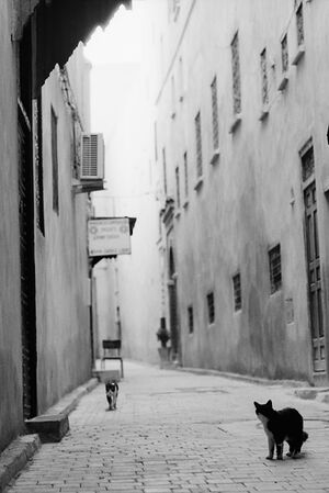 Cat walking deserted lane