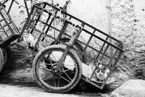 Cat on cart