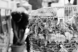 放鳥のための鳥籠