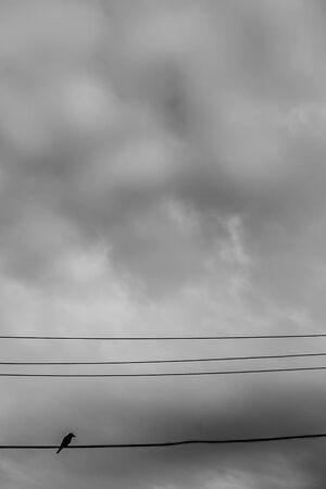 電線の上の鳥