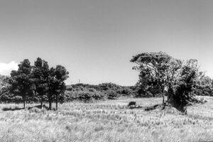 牧草地にいた家畜