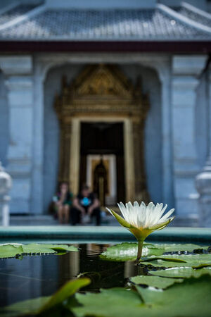 Lotus in Lak Mueang