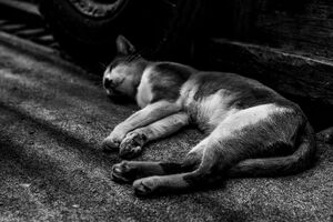 Cat entering a deep sleep by wayside