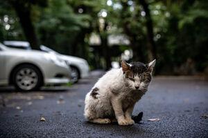 鋭い視線で喧嘩を売ってきた猫