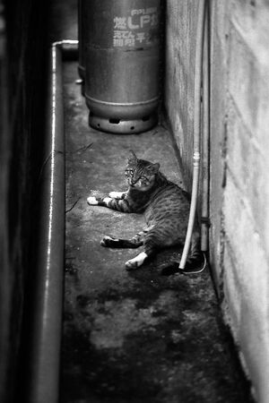 cat lying in narrow lane