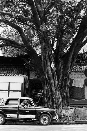 木の下のタクシー