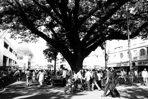People under big tree