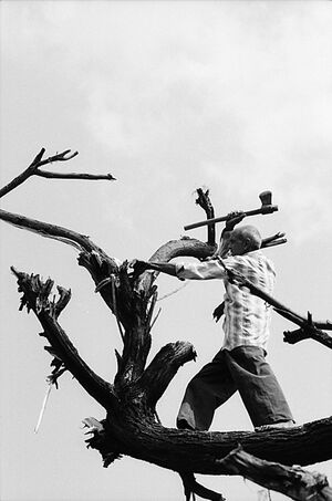 Man standing on tree