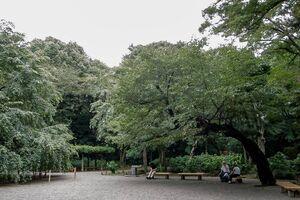 People relaxing under the trees in Rikugien Garden