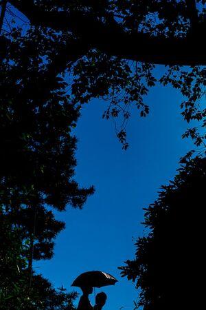 木々の葉の間に見える傘