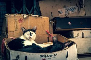 Two cats relaxing in cardboard box