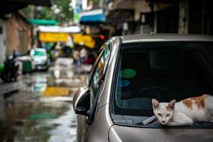 車のボンネットの上の猫