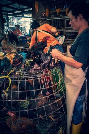 Man plucking out some chickens from the cage placed in the shop