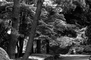 新宿御苑を散策する人