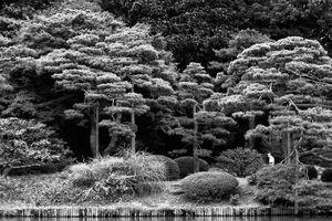 Trees in Rikugien Garden
