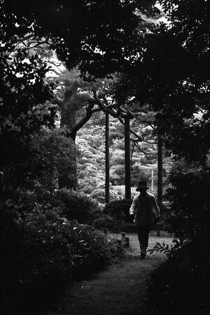 Silhouette walking in path